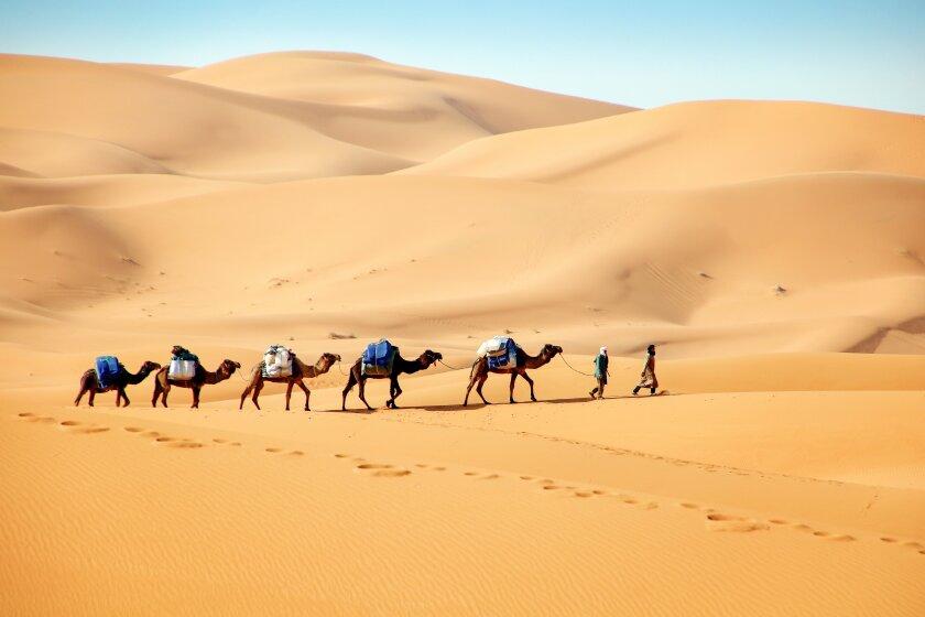camel_line_img_3382.jpg