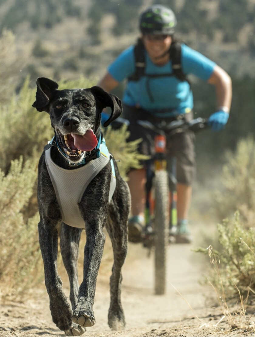 Evaporative cooling helps the Ruffwear Jet Stream vest keep an energetic pooch from overheating on the trail.