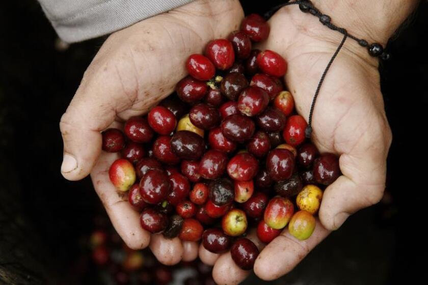 Cooperativa productora café Mi AEELA desmiente que no sea totalmente P.Rico