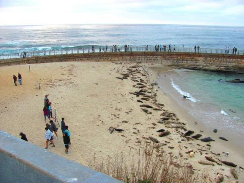 Beachgoers standing behind a barrier rope observe seals at Children's Pool in La Jolla.