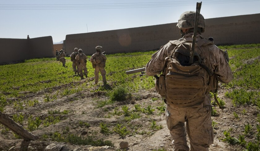 Marines on patrol maneuver past a small poppy field in Helmand province. The crop is used in the international heroin trade.