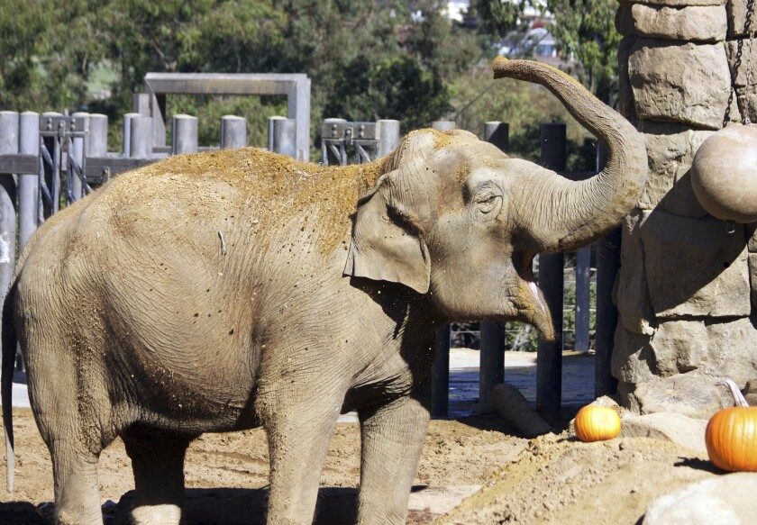 Santa Barbara Zoo's elephant euthanized