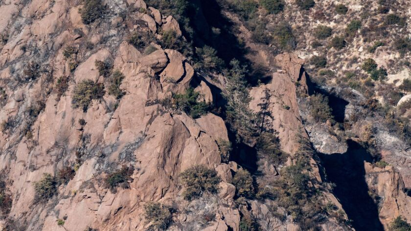 FILMORE, CA - DECEMBER 27: A condor's nest is seen on a cliffside near a lone pine tree in the Sespe