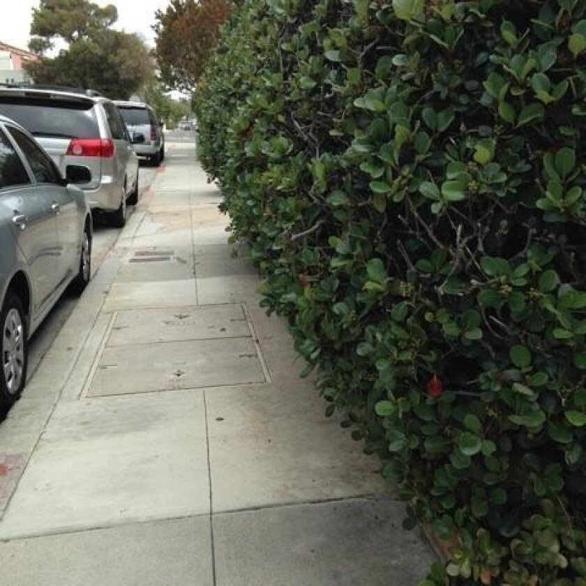 Who is responsible for trimming back hedges that block sidewalk right-of-ways?