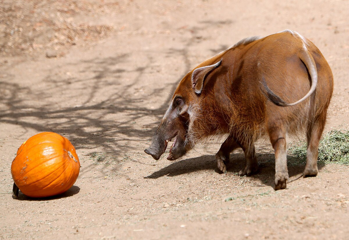 Photo Gallery: Annual Boo at the Zoo