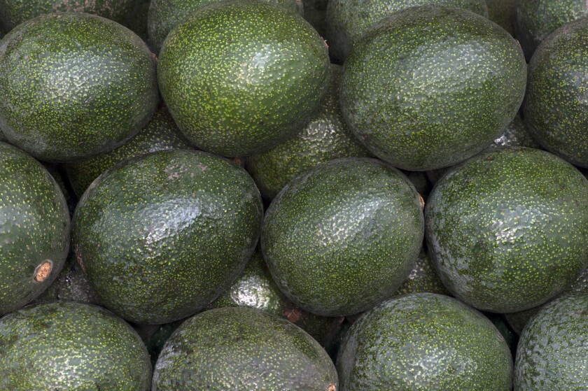Reed avocados grown by Atkins Nursery in Fallbrook at the Hollywood farmers market.