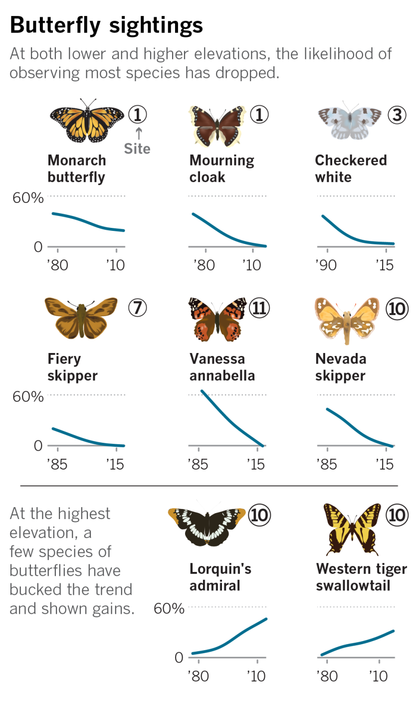 Chart showing the chances of a butterfly sighting in low and high elevations.