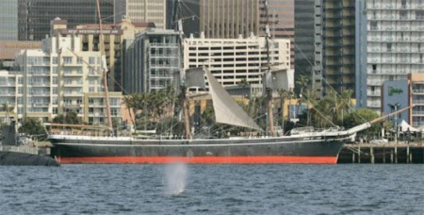 With the Star of India and San Diego's skyline as a backdrop, a gray whale emitted a spout of water while exploring San Diego Bay in 2009. (Bruce K. Huff / Union-Tribune)
