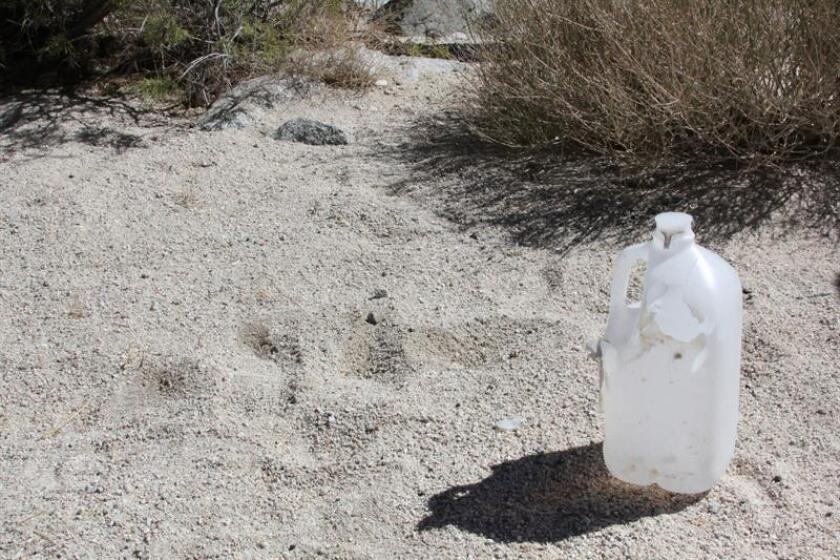 """La Patrulla Fronteriza Sector Tucson aseguró hoy que sus agentes tienen claras instrucciones de """"no tocar, retirar o destruir"""" agua o comida que encuentren en el desierto, en respuesta a una denuncia de una organización humanitaria con base Arizona. EFE/ARCHIVO"""