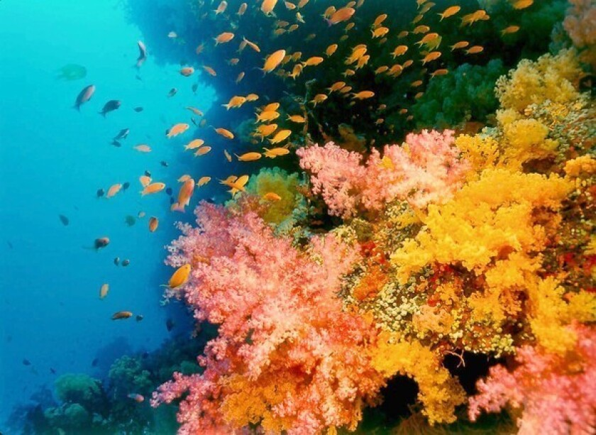 Coral reef documentary to screen in Laguna