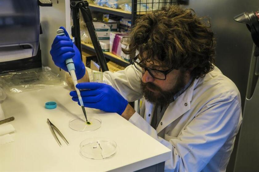 El científico chileno Tomás Egaña enseña una muestra de microalgas utilizadas en una investigación de la Universidad Católica hoy, jueves 15 de noviembre de 2018, en Santiago (Chile). EFE