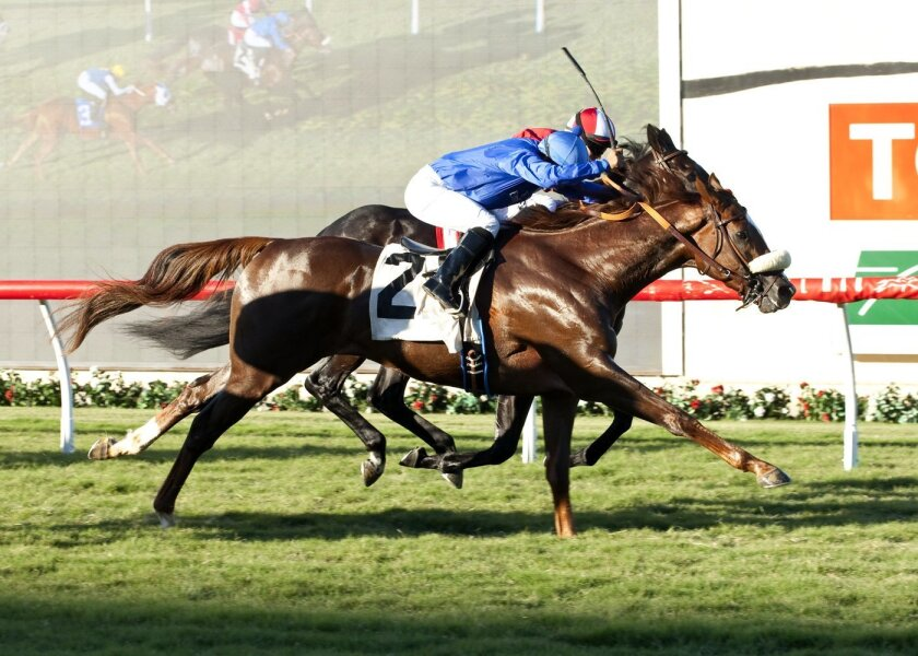 Crittenden won the Let It Ride Stakes for trainer Eoin Harty under jockey Martin Garcia on Breeders' Cup Saturday at Del Mar.