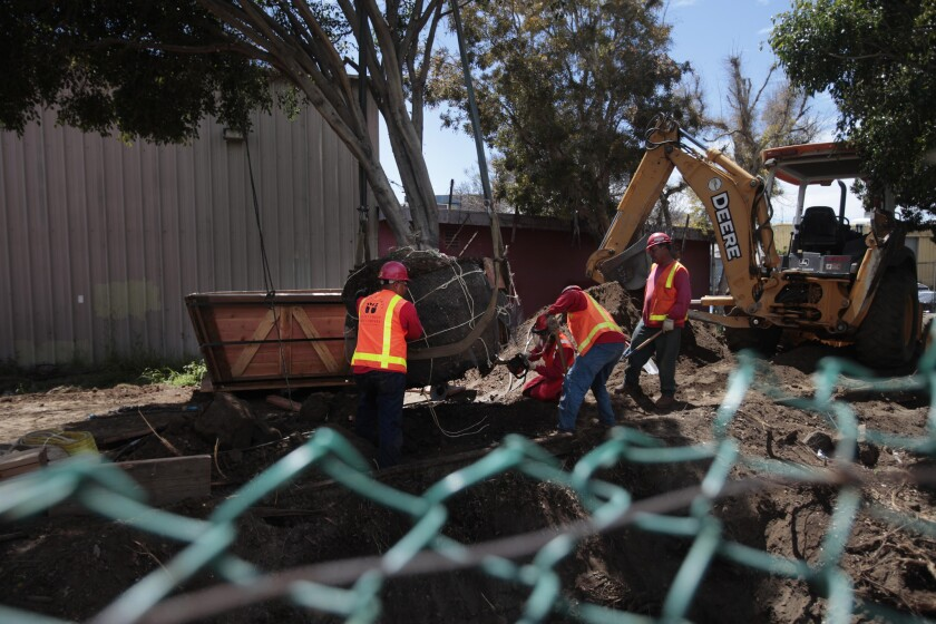 Crews remove trees at Bergamot Station along Olympic Boulevard at 26th Street in Santa Monica in preparation for construction of Phase 2 of the Expo Line.