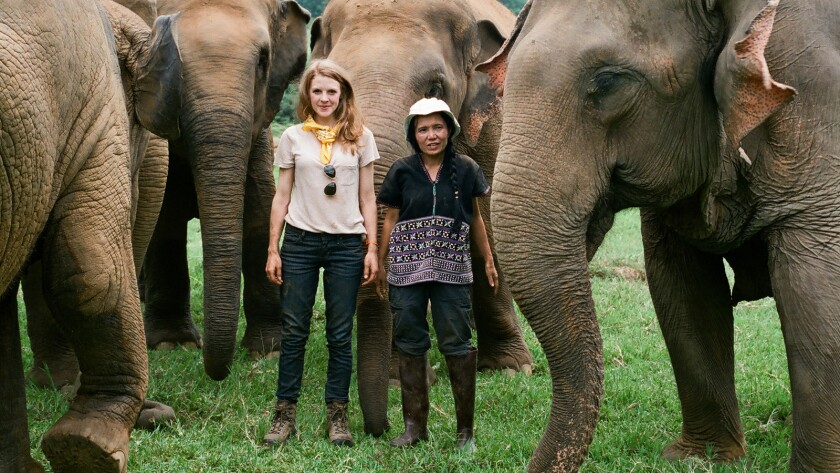 (L-R) - Ashley Bell Lek Chailert surrounded by Lek's herd at Elephant Nature Park in Chiang Mai Thai