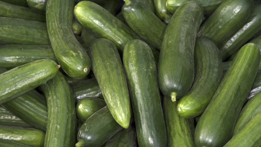 Persian cucumbers grown by Lark Farms in Fillmore, at the Torrance farmers market 8/31/13 © David Ka