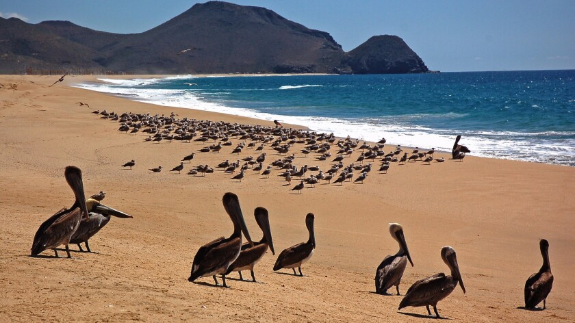 Todos Santos, about an hour north of Cabo San Lucas in Baja California, features miles of mostly empty beach with rough surf and plenty of seabirds.