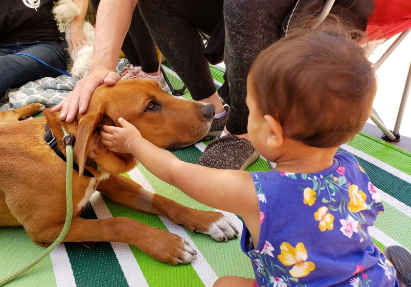 Dogs like this one at a previous adoption event will be available for adoption at the 14th annual Cupids & Canines MEGA Adoption event on Feb. 22 at Grossmont Center in La Mesa. Cats, rabbits, birds and other critters will also be at the event.