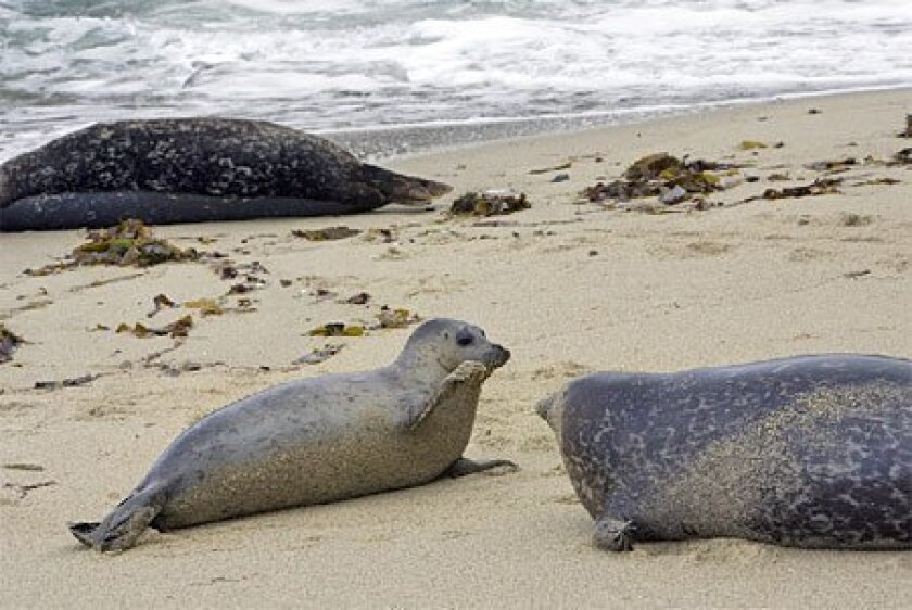 Legislation introduced by state Sen. Christine Kehoe, D-San 