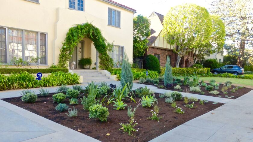 South Side with New Drought Tolerant Plantings November 2015. Linda Sarnoff let her lawn die off