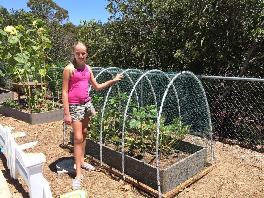 Grace Fisher has received crucial help from volunteers in the Carrillo garden project, such as with this  planter box cover that helps prevent peacocks from nearby Leo Carrillo Ranch from devouring the plants.