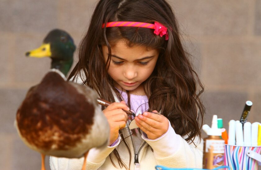 Vanessa Del Castillo works on a duck project behind a mallard duck on display at the San Elijo Lagoon nature center in Cardiff, where a monthly family fun day offered instruction and activities about the bird populations there.