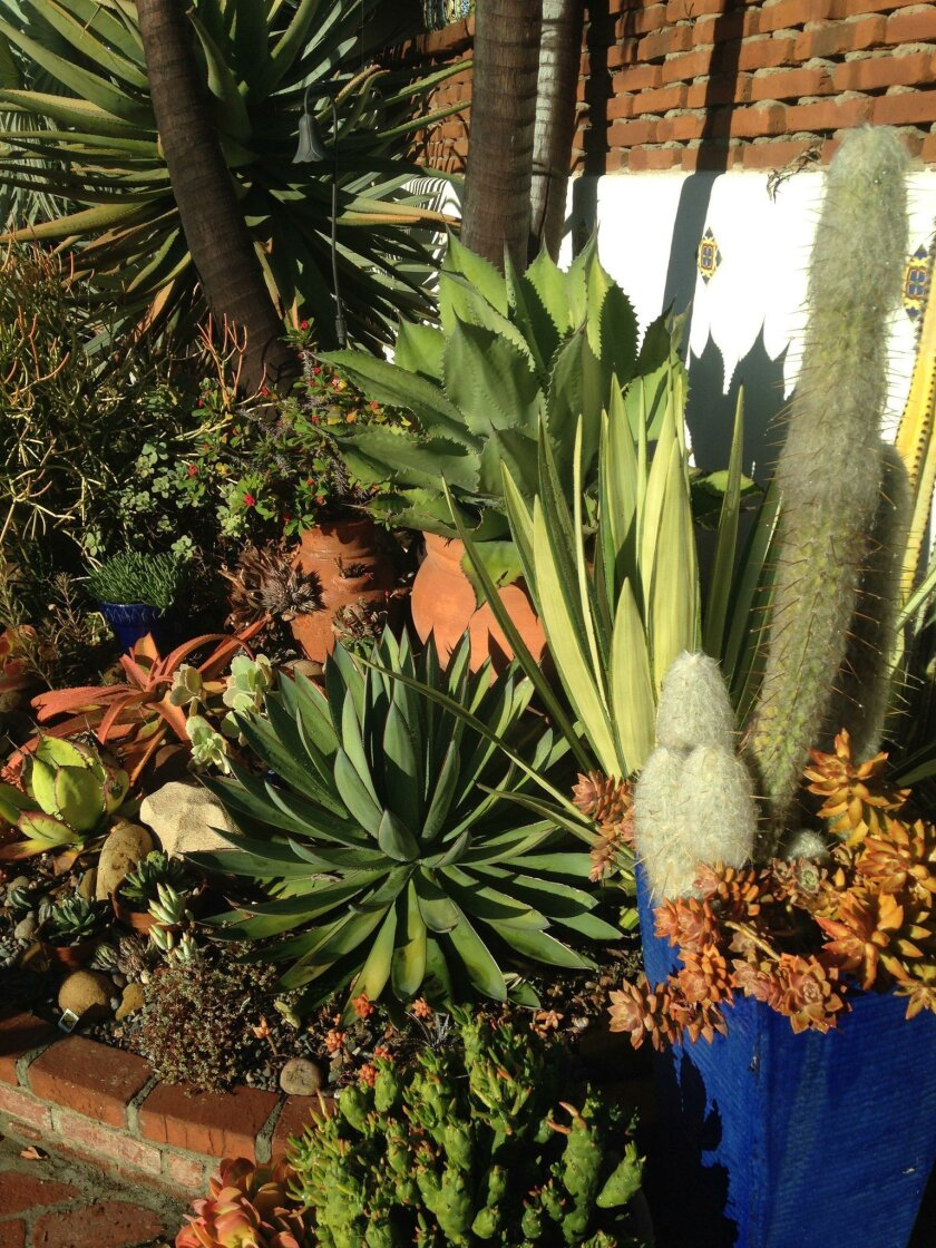 Aloe and agave collections are showcased in this canyon-side garden on the Mission Hills Garden Walk. This year's event is on May 7.
