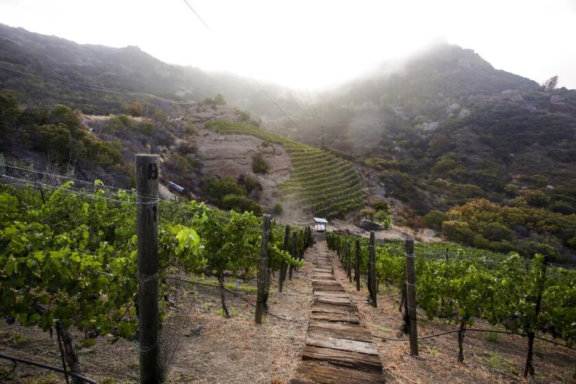 Malibu wine
