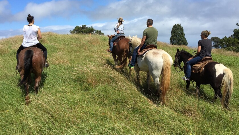 At Piiholo Ranch, guests can ride horses through Maui's upcountry as they help wrangle cattle.