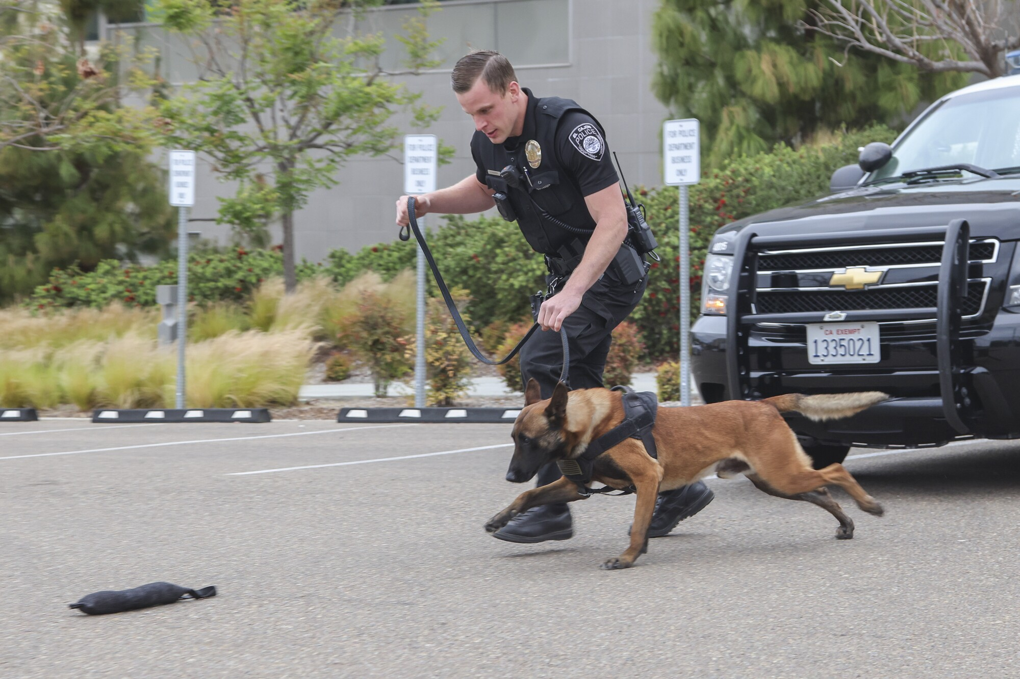 El Cajon police officer Stephen Hannibal works his new dog Ace at the El Cajon Police Department.