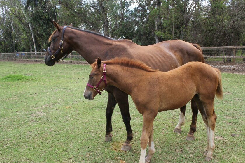 Osuna with her dam, Rio Diva. Photo by Karen Billing
