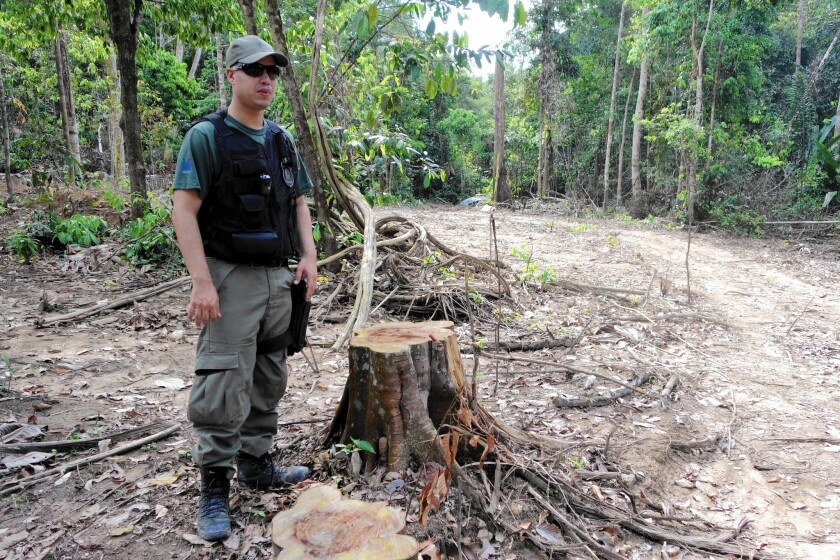 A Brazilian environmental officer stands next to a tree stump