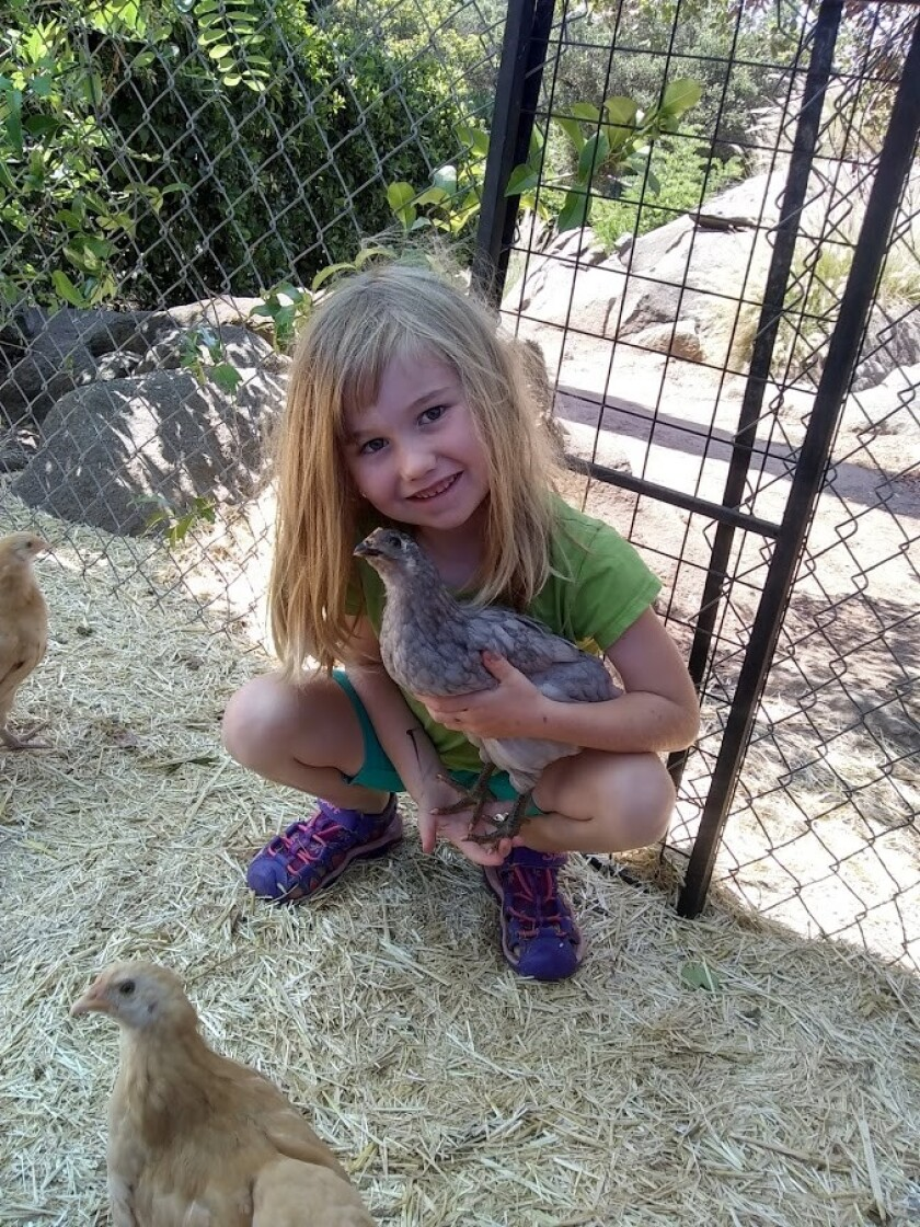 Claire, 6, holding Chickers.