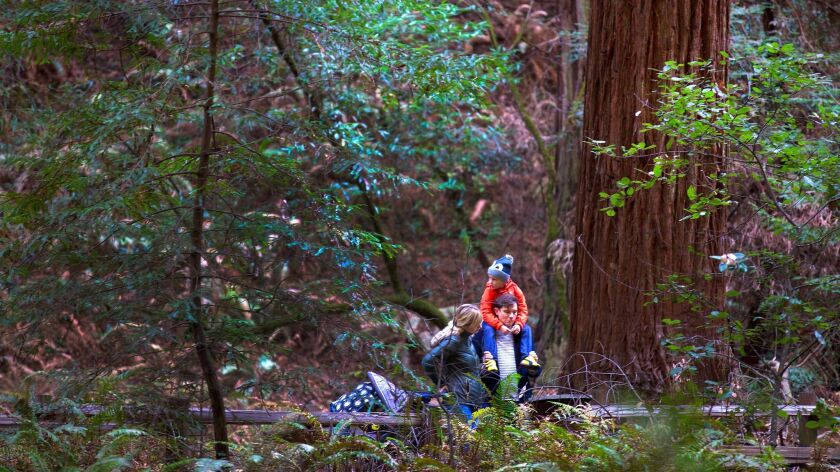 Skip the $10 per person entrance fee to Muir Woods National Monument in Mill Valley, Calif., on selected days in April. It's all in celebration of National Park Week.