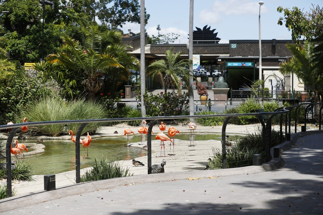 The flamingo area is normally one of the most crowded areas at the San Diego Zoo but not on May 19, 2020.