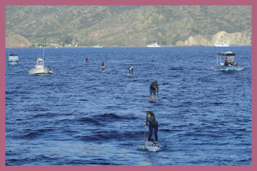 Paddle boarders on the water from Catalina Island