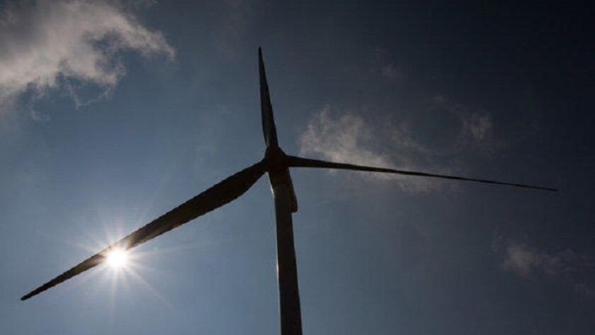 A new study estimates that more than 600,000 bats were killed by wind power turbines in 2012.