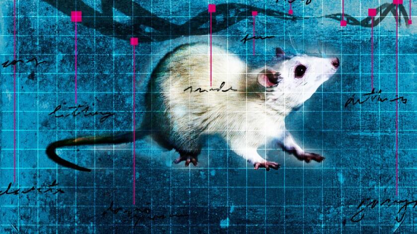 A test mouse.