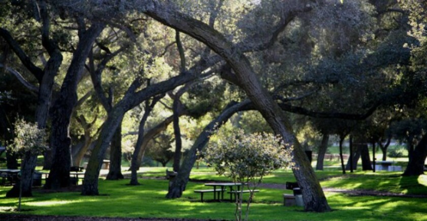 Live Oak Park is celebrating its 100th birthday this weekend.