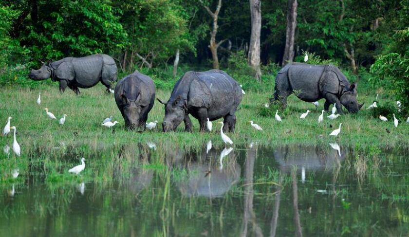 """Como """"un éxito"""" define la utilización del banco genético RhODIS para ayudar a perseguir y capturar a los que proveen los preciados cuernos de rinoceronte a los traficantes uno de sus creadores, Stephen O'Brien, científico de la Universidad Nova Southeastern (Florida, EE.UU). EFE/EPA/STR"""