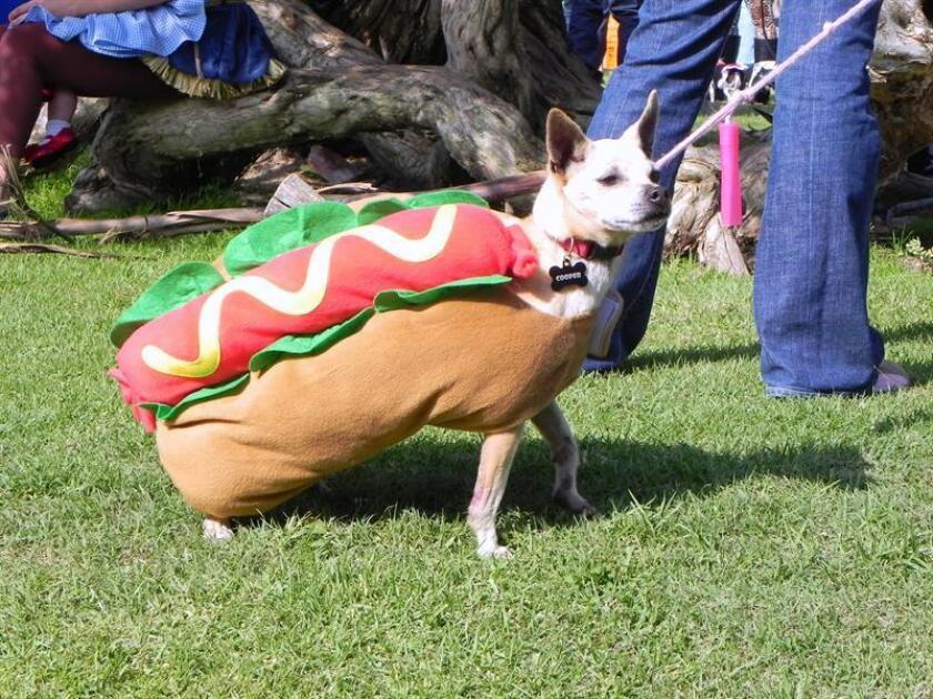 Fotografía de archivo de un perro disfrazado como perro caliente. EFE/Archivo