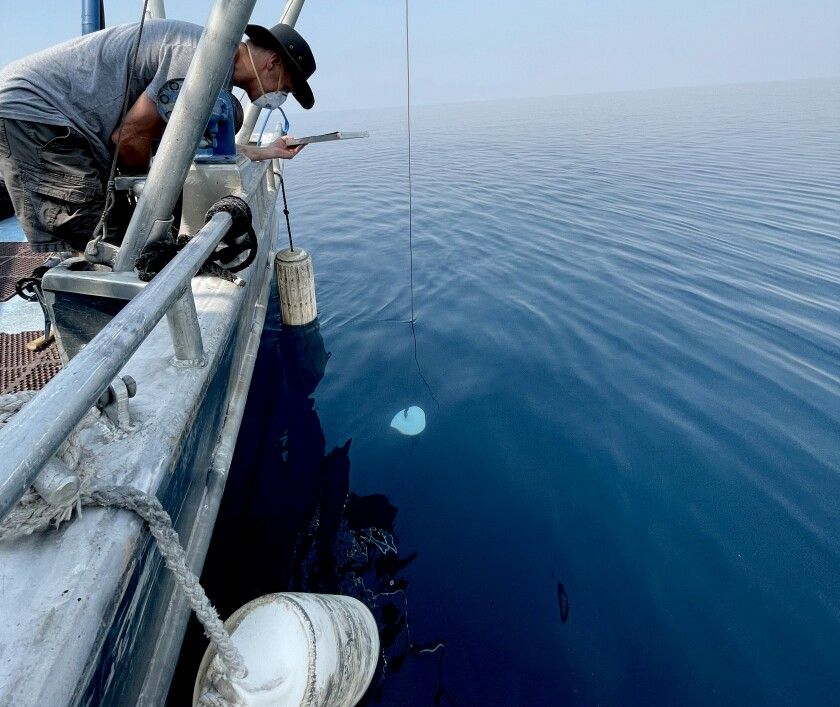 UC Davis researcher Brant Allen lowers a tool called a Secchi disk into Lake Tahoe.