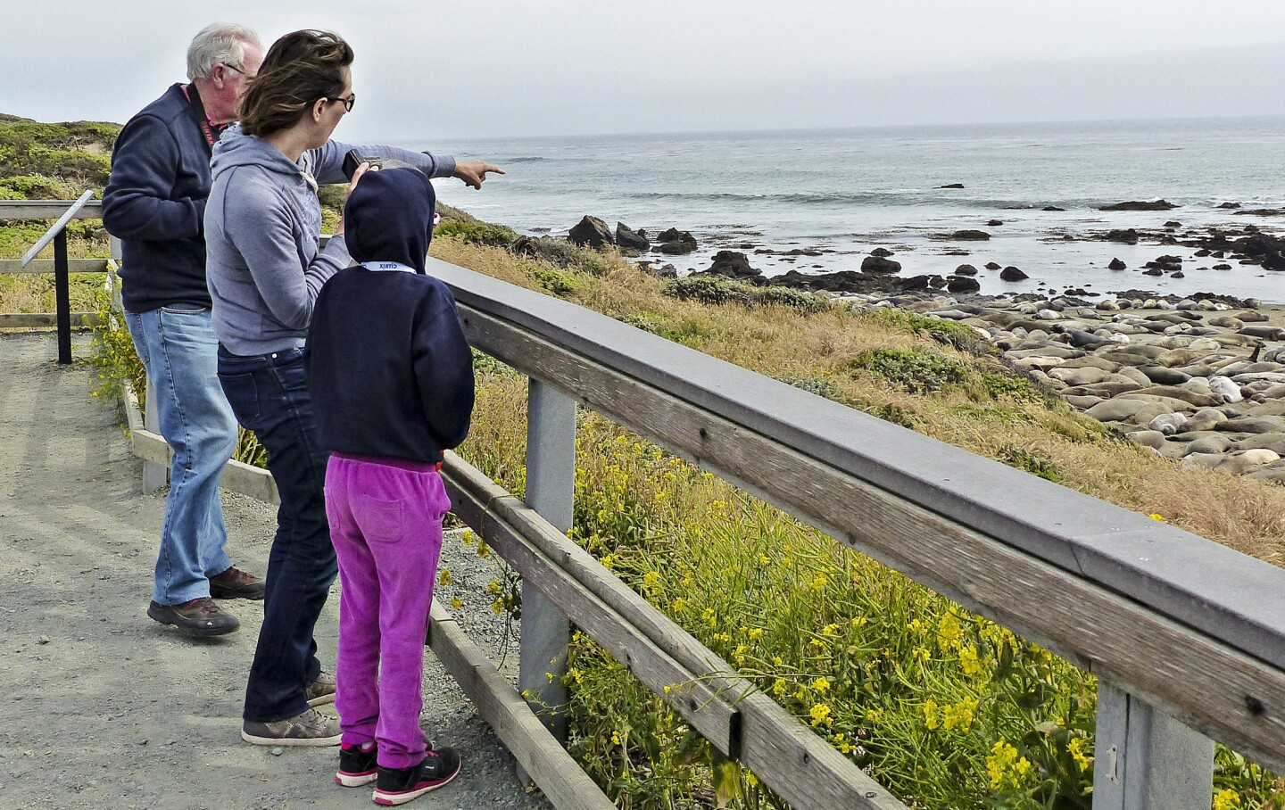 Visitors watch the elephant seals from a safe distance.