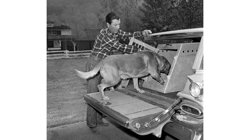 Nov. 7, 1961: Actor Robert Taylor loads Henry into a station wagon as flames threatened his Mandevil