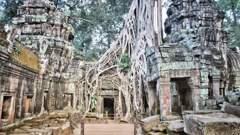 Ta Prohm is the temple ruins covered by the surrounding jungle at Angkor in Cambodia.