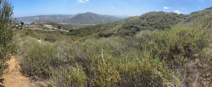 (Above and below) Photos of some of the of virgin habitat overlooking Lake Hodges, known as Del Dios.
