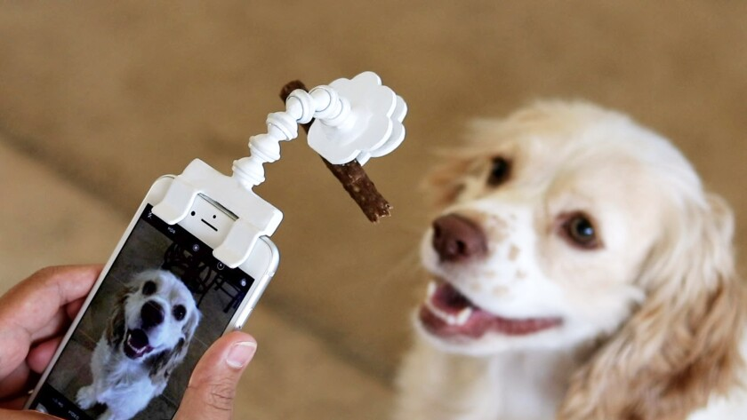 This is for all those obsessed with getting the perfect picture of their pet for Instagram. Flexy Paw catches the attention of your pet with an arm that extends above your phone and holds a treat, giving you plenty of time to snap a picture that isn't just a blur. $19.99. Pawchamps.com