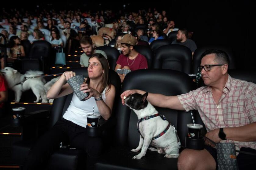 Dozens of people and their dogs attend the preview of 'A Dog's Way Home', in the movie theater of the Frei Caneca shopping center, in Sao Paulo, Brazil, 24 February 2019. A cinema in Sao Paulo, the largest city in Brazil, opened its doors this Sunday to some 180 dogs of all races and sizes to 'attend' with their owners the movie 'A Dog's Way Home', in a pre-release as special as different . EPA-EFE/ Sebastiao Moreira