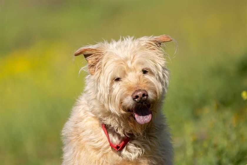 Max is the pet of the week at the San Diego Humane Society's Escondido campus.