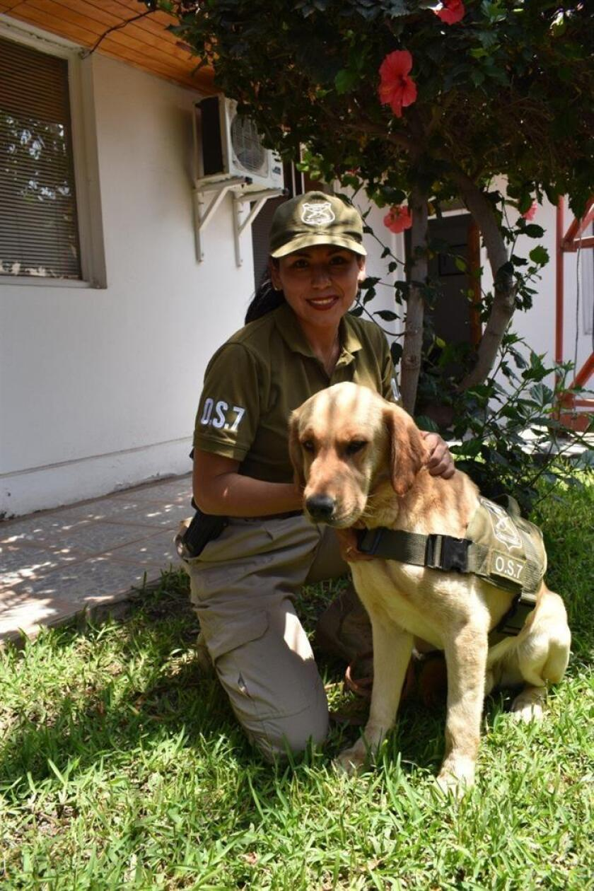 Didier, a drug-sniffing dog assigned to police in the northern Chilean city of Arica, is seen reunited with its handler on Nov. 19, 2018, the day it decided to come home after going missing for seven days. EFE-EPA/Carabineros of Chile