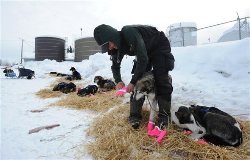 Musher Matt Failor puts booties on Angel prior to leaving the Iditarod checkpoint in McGrath on Wednesday, Mar. 6, 2013.   (AP Photo/The Anchorage Daily News, Bill Roth)  LOCAL TV OUT (KTUU-TV, KTVA-TV) LOCAL PRINT OUT (THE ANCHORAGE PRESS, THE ALASKA DISPATCH)